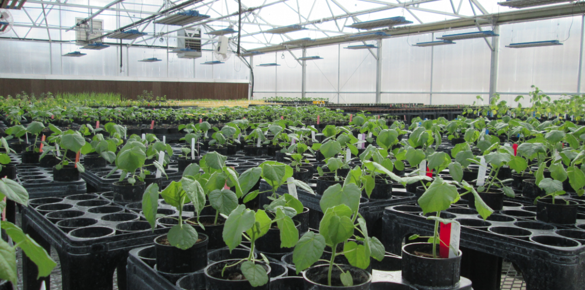Inside the PAT Lab Greenhouse